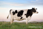 casein is found in milk from cows